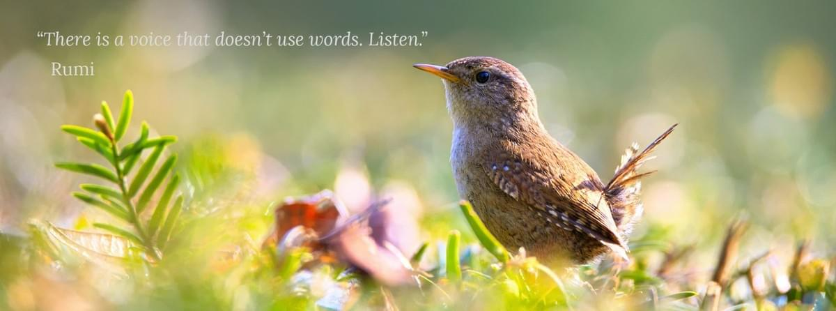 Wren in hazy bushes with Rumi quote, there is a voice that doesn't use words. Listen