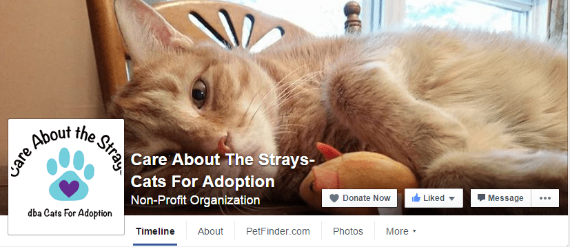 Facebook - Care About the Strays