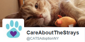 Twitter - Care About the Strays