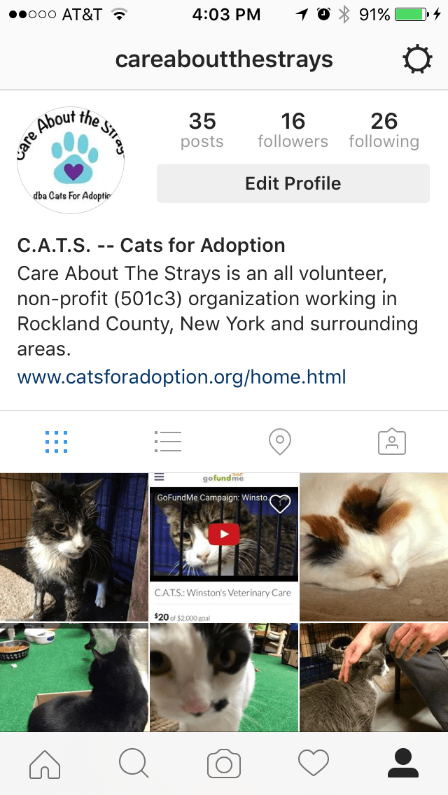 Instagram - Care About the Strays