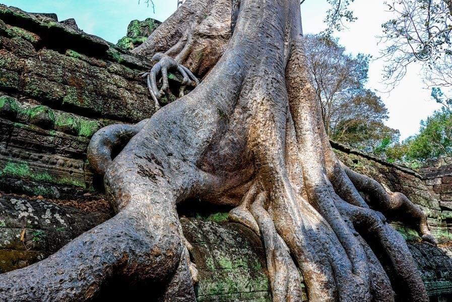Image showing Ta Prohm Temple at Angkor Wat, Siem Reap Cambodia