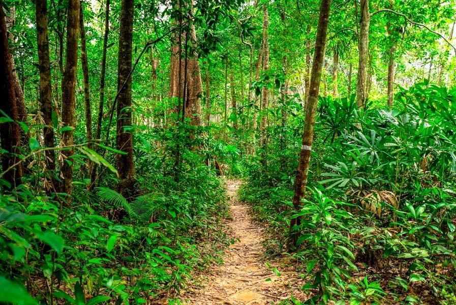 Image showing the jungle trail between M'Pay Bay and Clearwater Bay on Koh Rong Samloem in Cambodia