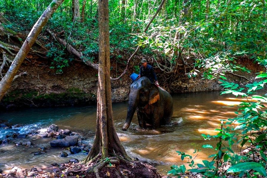 Image showing a rescued former working elephant bathing in a river in the protected forest of the Elephant Valley Project (EVP) in Sen Monorom, Cambodia.