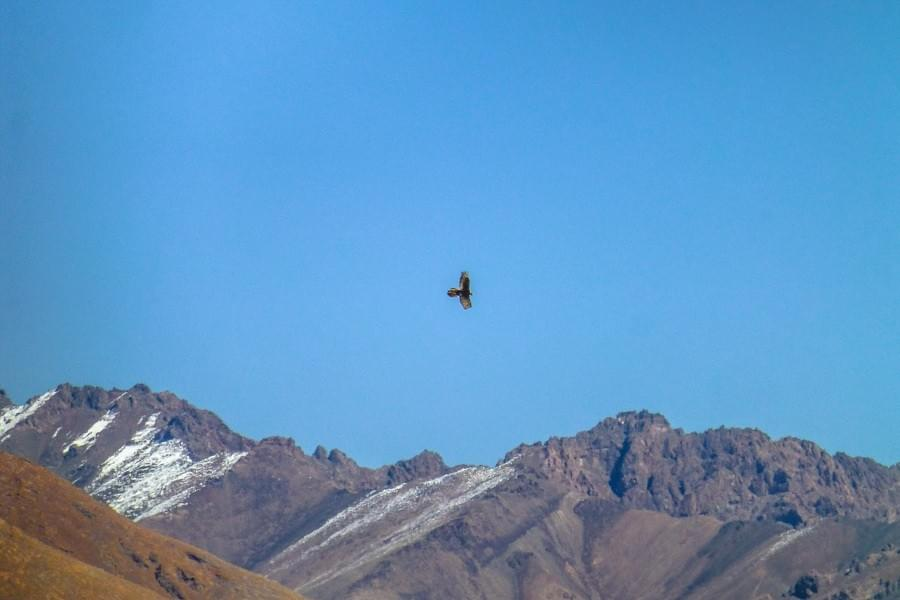 Image showing eagle flying over the mountains at the Pamir Highway.