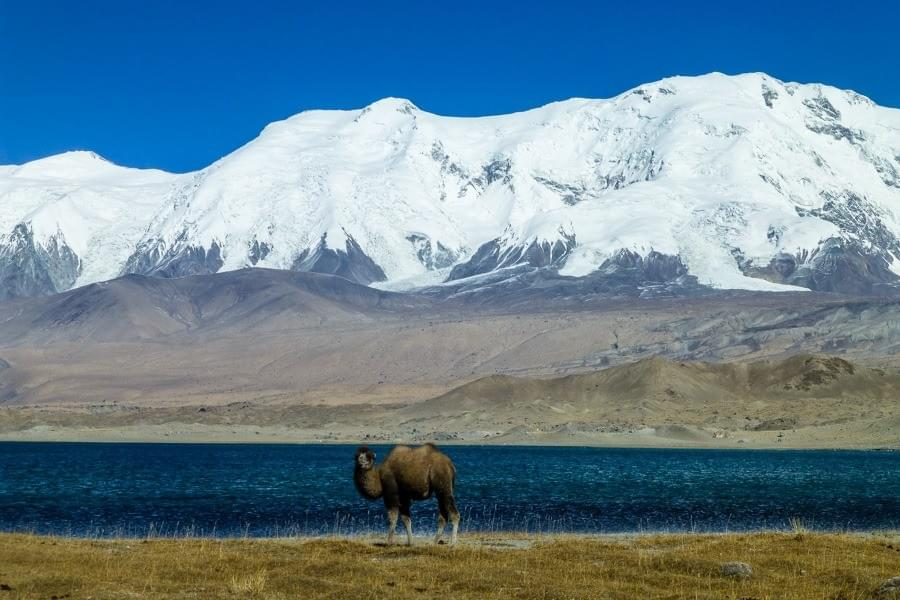 Image showing a camel at the Karakul lake along the Karakoram Highway between Kashgar and Tashkurgan in China.