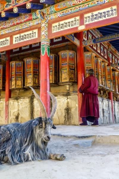 Image showing a Tibetan monk and mountain goat in front of the Tibetan Labrang monastery and its prayer wheels in Xiahe, China.