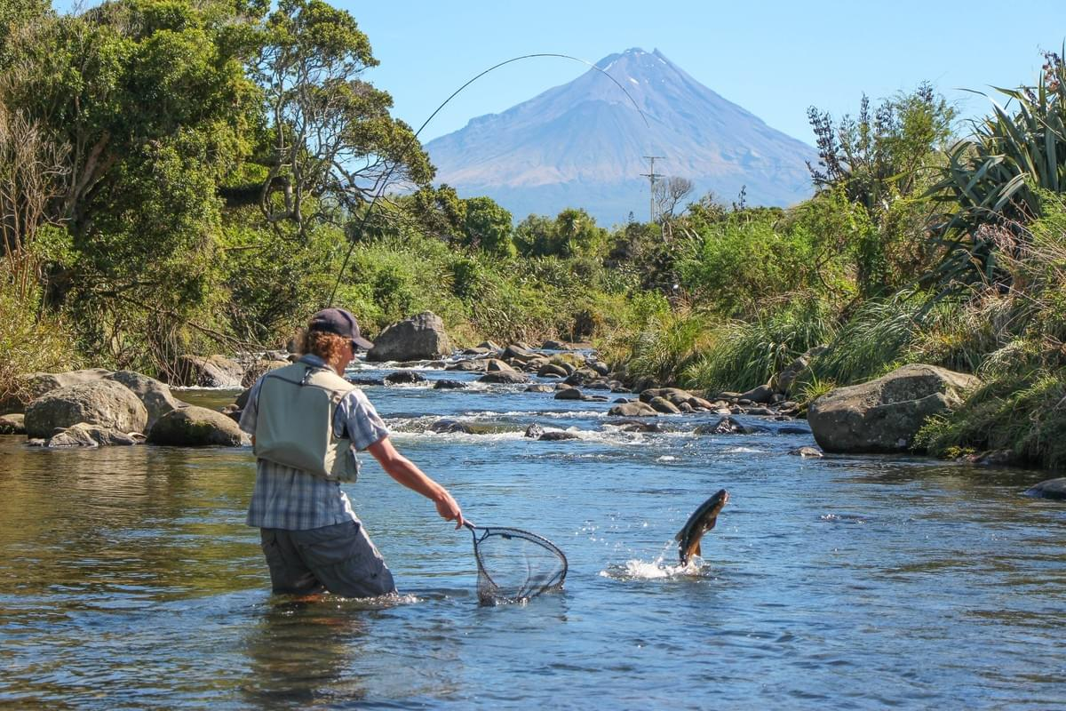 Net resistant big brown trout leaping in Taranaki river, New Zealand fly fishing guide Adam Priest