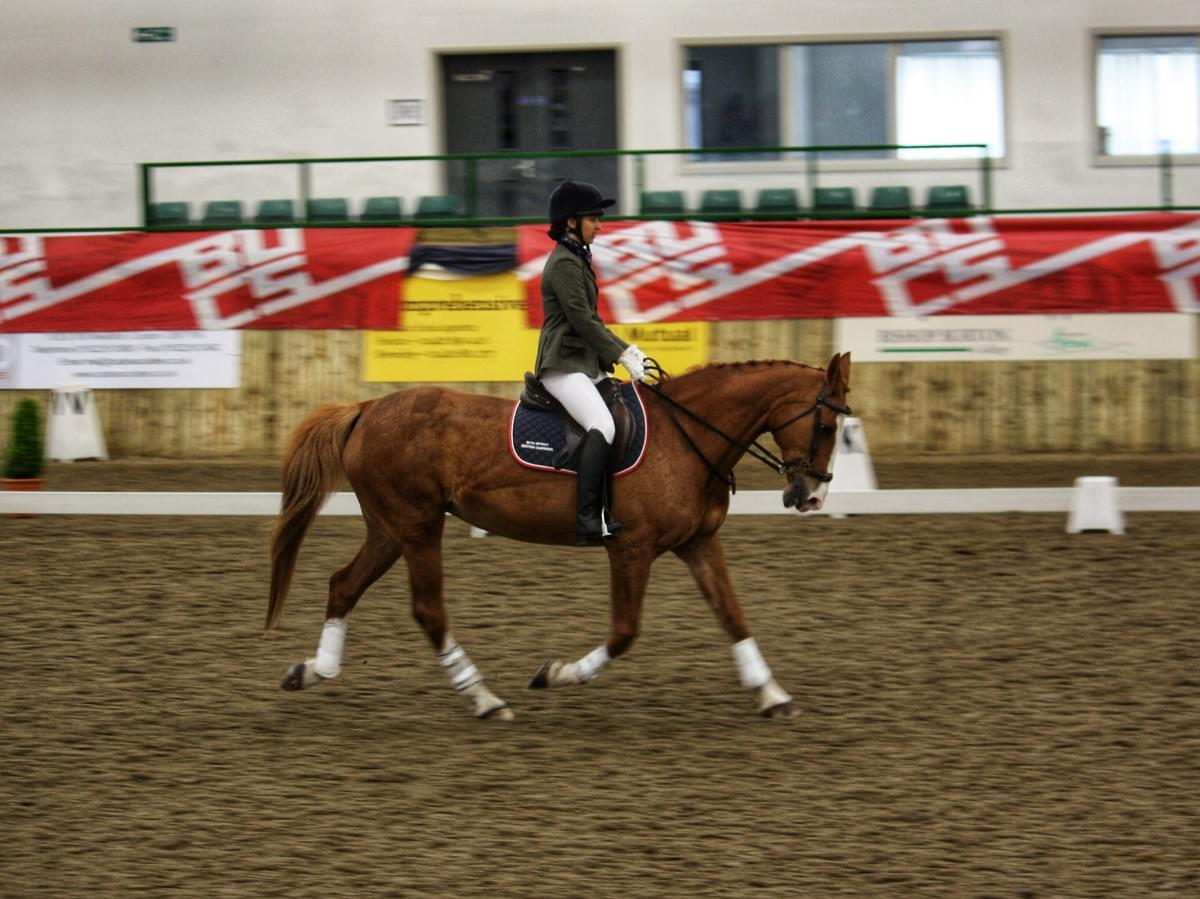 Caledonia in the dressage.