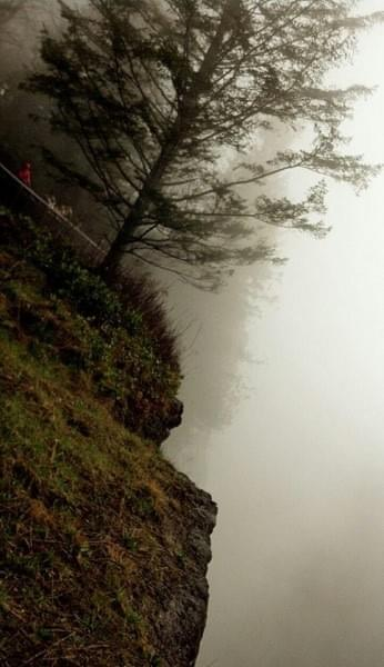 Fog, tree, cliff at Snoqualmie Falls, North Bend, Wash.