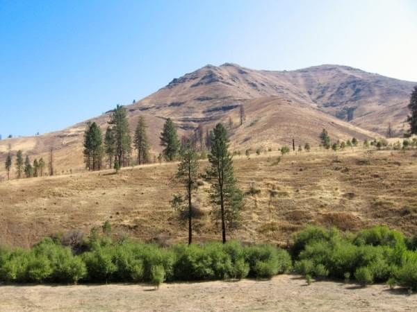 Trees + High Desert at Joseph County, Oregon
