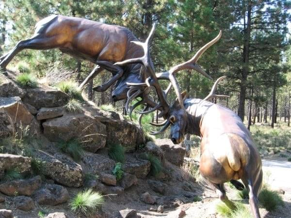 High Desert Museum at Bend, Oregon