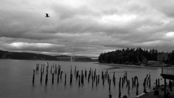 Seagull, stiles, Tacoma Narrows via Titlow Beach, Tacoma, Wash.