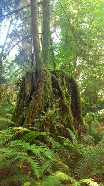 The Bloedel Reserve, Bainbridge Island, Wash.