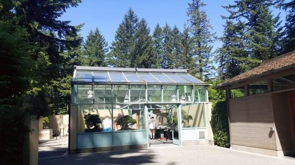 Greenhouse at Pacific Bonsai Museum, Federal Way, Wash.