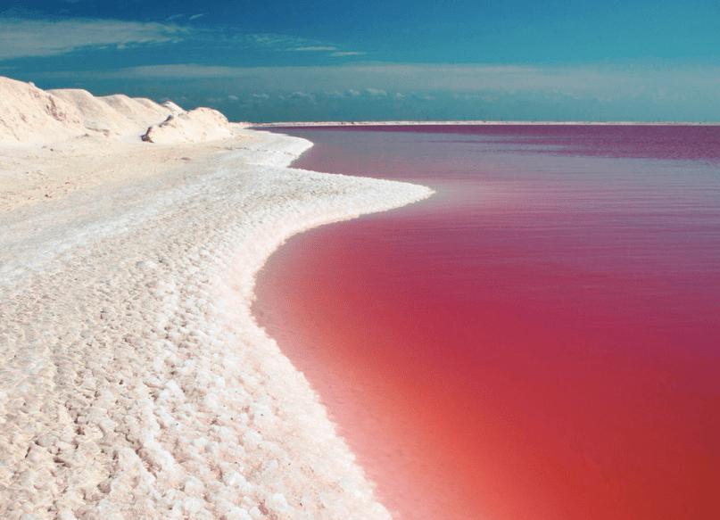lac rose rio lagartos