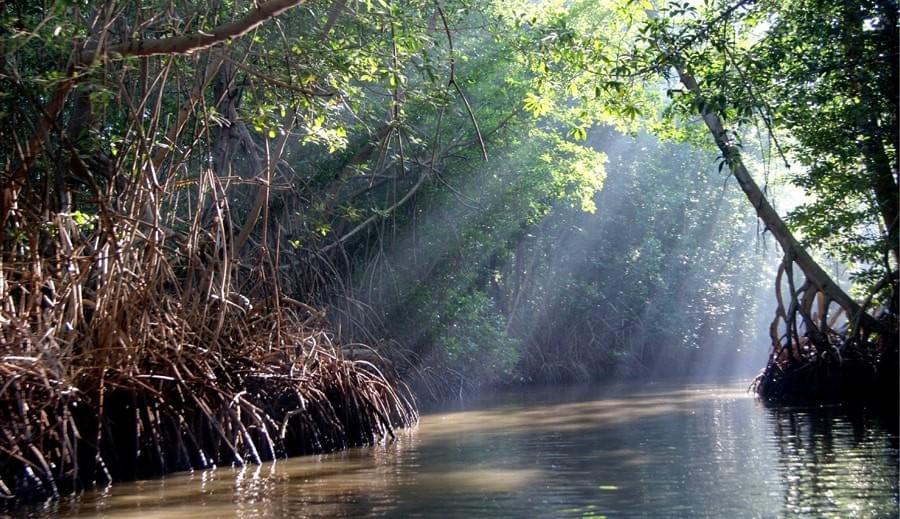 mangrove celestun