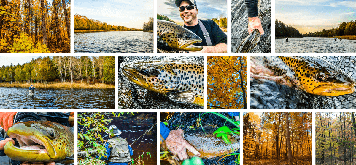 upper peninsula brown trout fly fishing in the fall