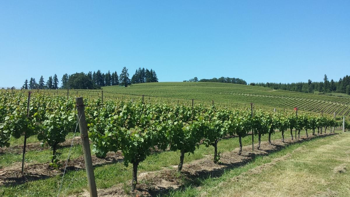 Vineyards at Owne Roe Winery