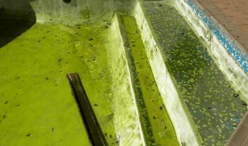 A swimming pool with green slime shows what happens when you neglect pool maintenance