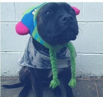 Dog wearing coat and beanie