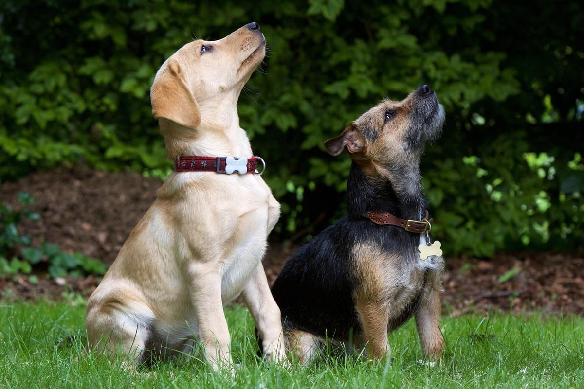 CD Dog Training Norfolk Novice Dog Training Course