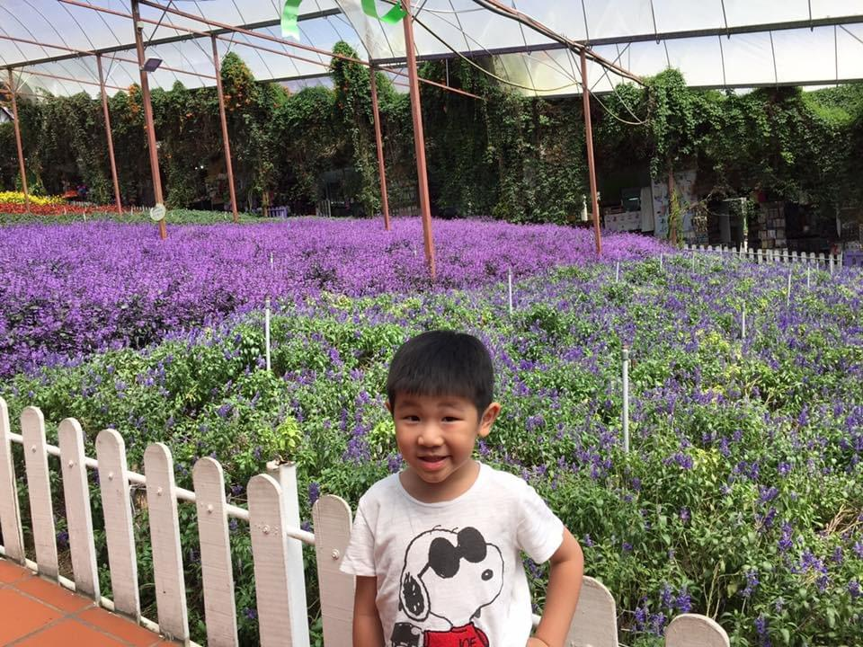 colorful flowers all year round at lavender gardens #malaysia #familytravel #travelwithkids #cameronhighlands