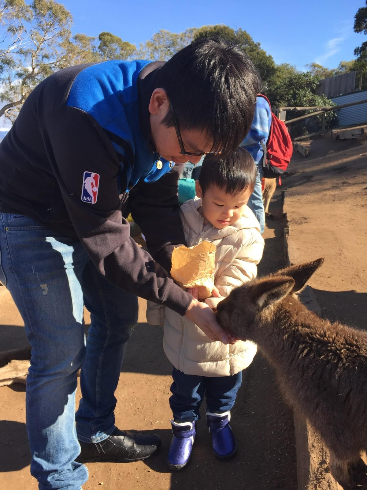 feeding kangeroos at Bonorong Wildlife Sanctuary. 11 Places to visit in Hobart, Tasmania