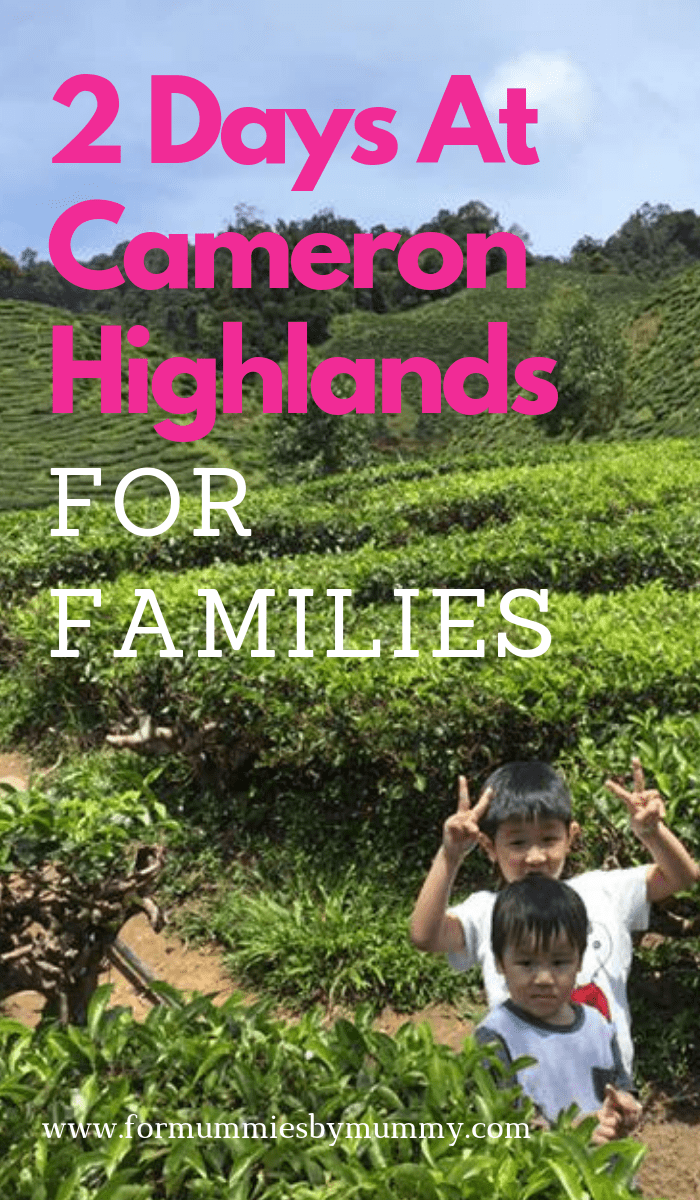 what to do at Cameron Highlands for families with young kids #familyvacay #familytravel #cameronhighlands #malaysia #travelwithkids