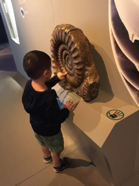 touching exhibits at Lee Kong Chian Natural History Museum