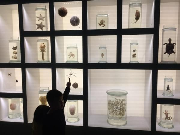 preserved specimens in jars at Lee Kong Chian Natural History Museum