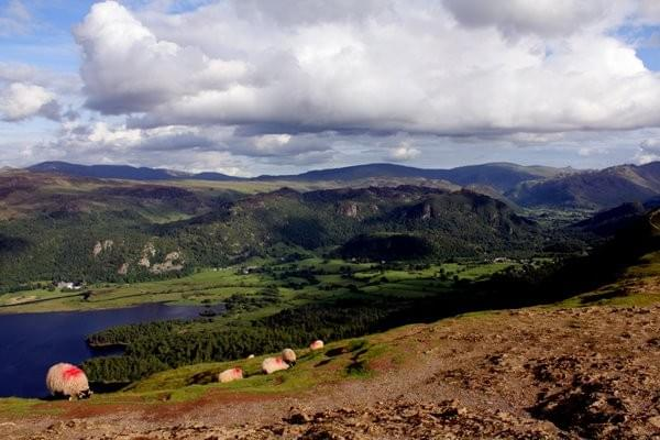 Cat Bells walk