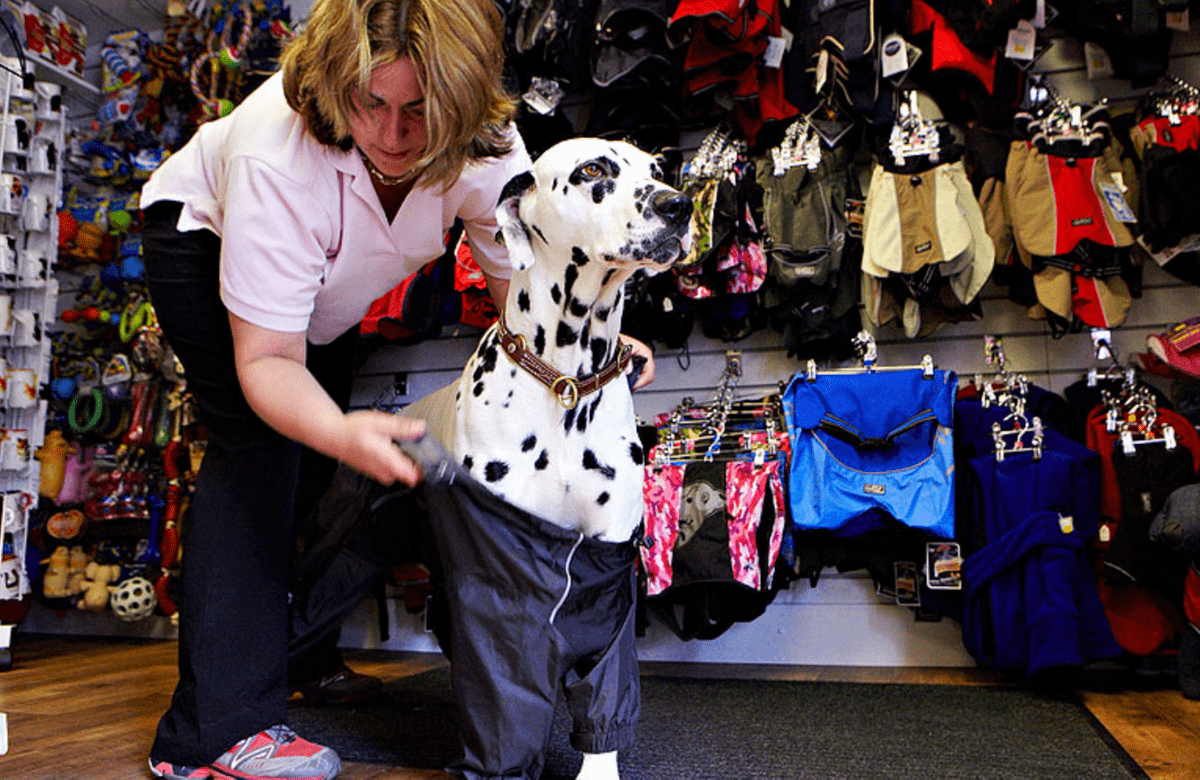 dog jacket fitting at Podgy Paws in Keswick
