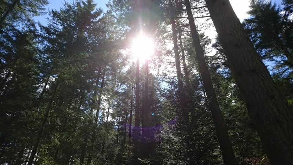 light shining through the trees in grizedale forest, Lake District