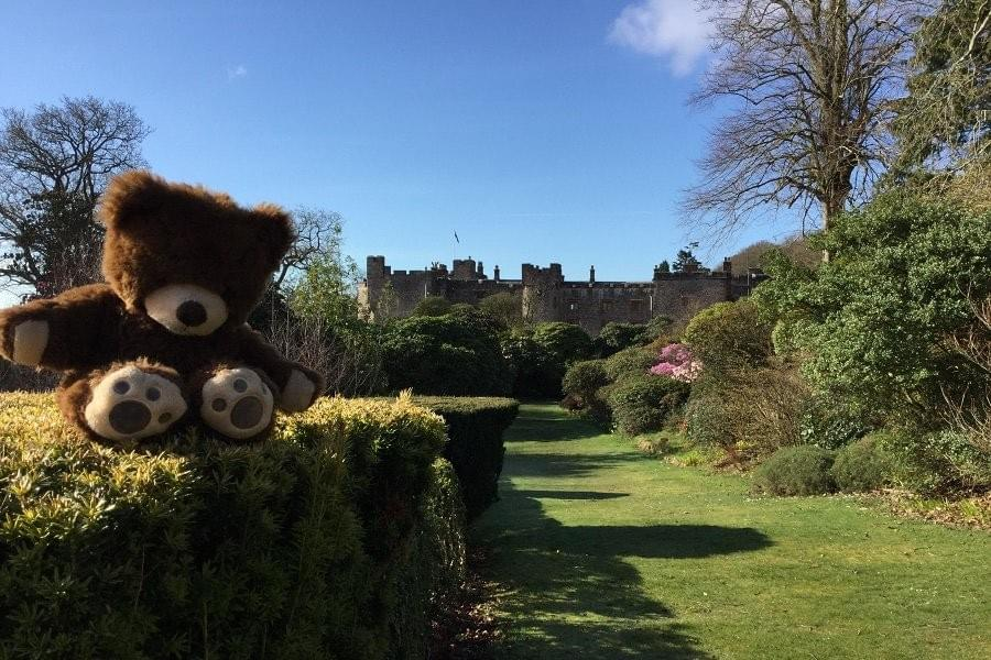 teddys go free , teedy on the lawn at muncaster castle, for easter in the lake district