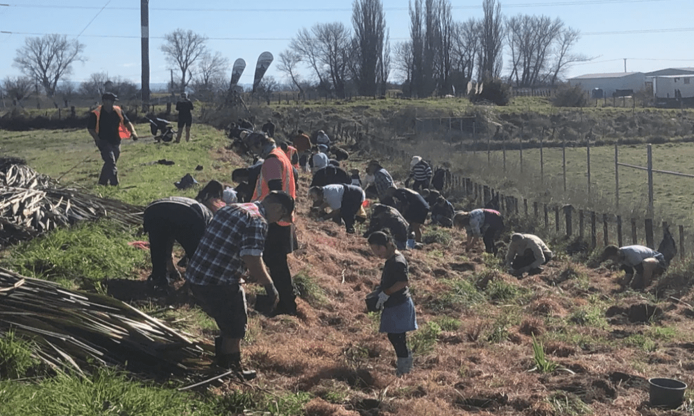 Community planting day at Hawea Historical Park
