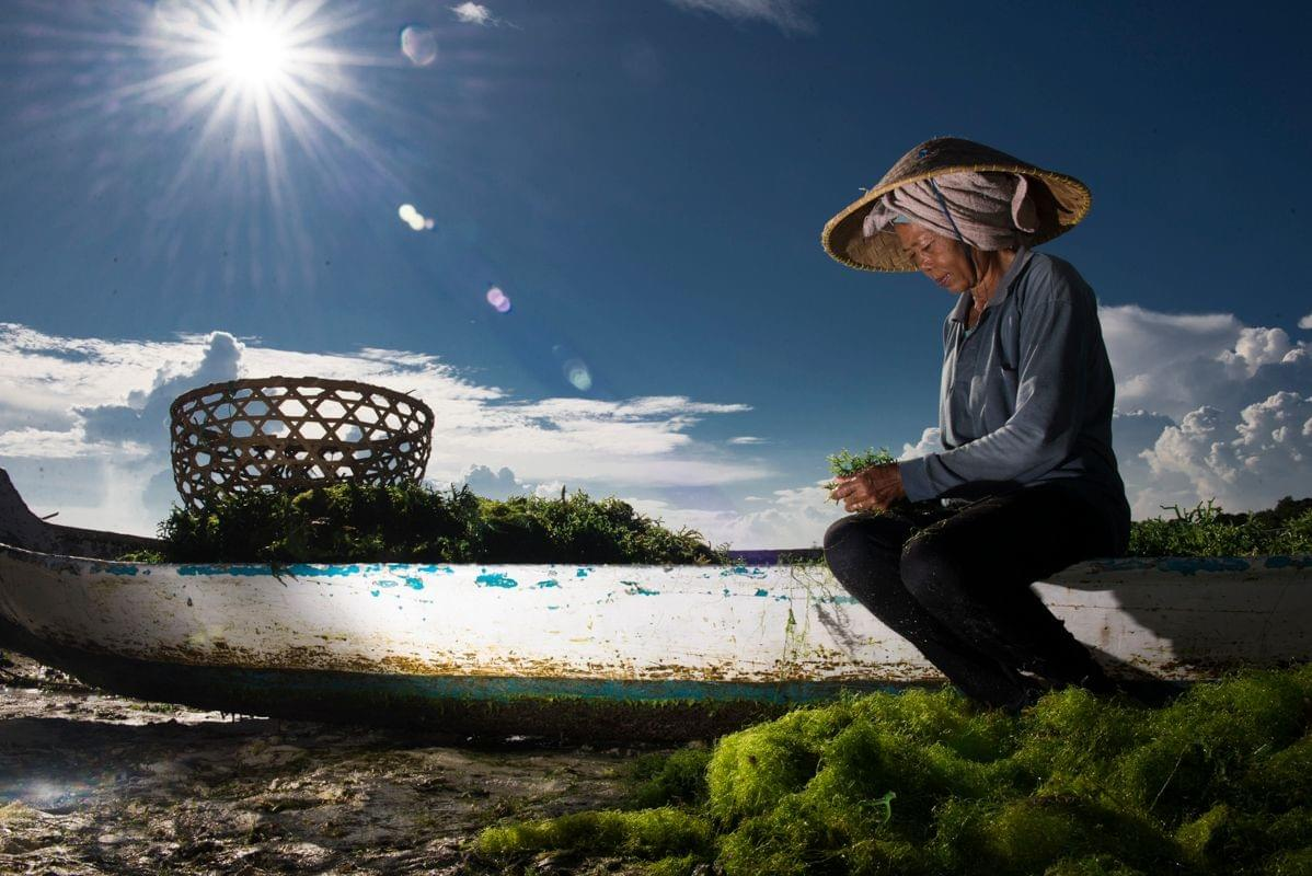 Seaweed farming is an activity that is restorative to oceans, creates livelihoods for coastal communities, and offers job opportunities to women. Photo credit: Carol da Riva