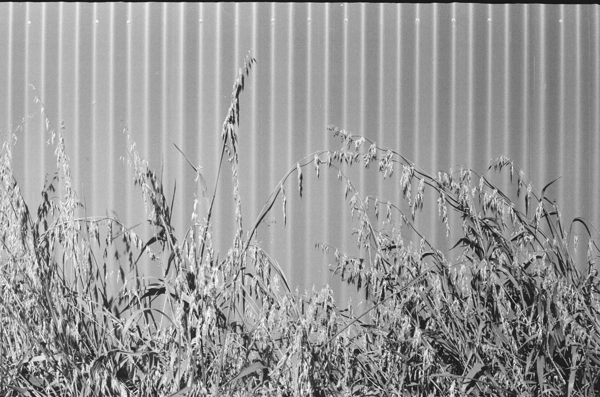 Corregated fence and weeds in the sun in black and white taken on a Fed 2 camera