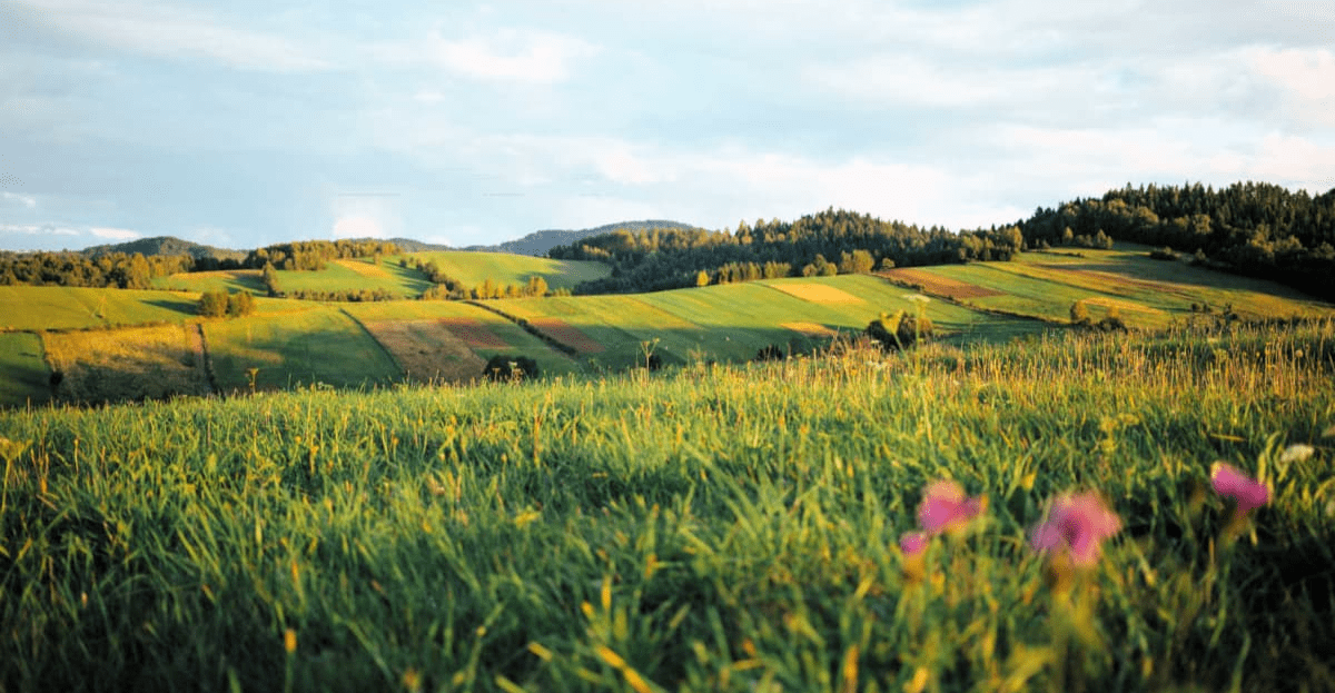 Regenerative Landwirtschaft - Soil Alliance