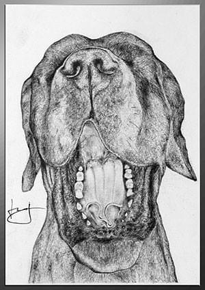 Dessin animalier, Dogue allemand