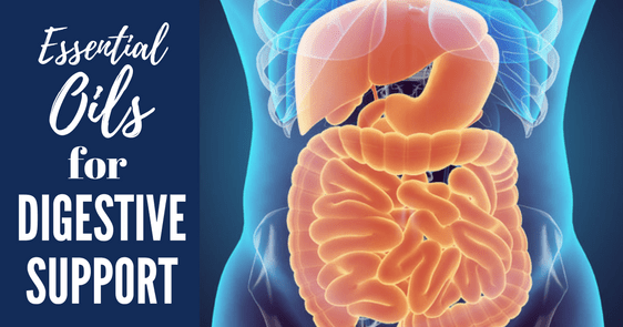Essential oils for Digestive Support