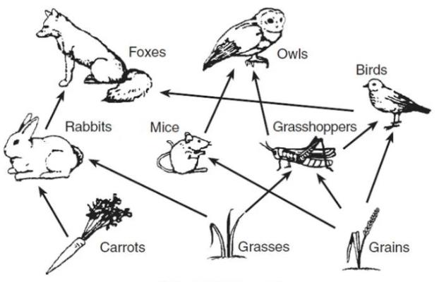 biol - food chain and food web