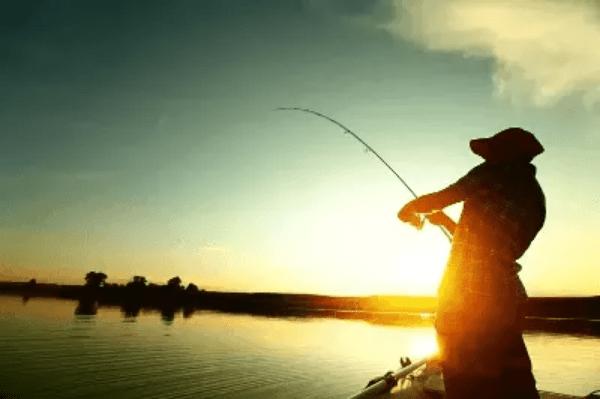Essen Katilayu Untuk Umpan Mancing Ikan Mas