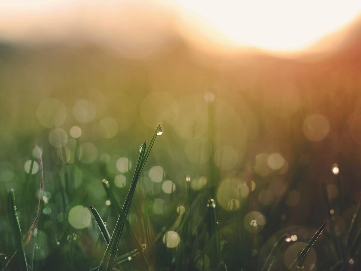 "A photo of a field at sunrise with visible dew on the blades of grass as featured in The Purple Dog Blog post ""* Simple Rules for Better Mornings"" by The Purple Dog Vegan"