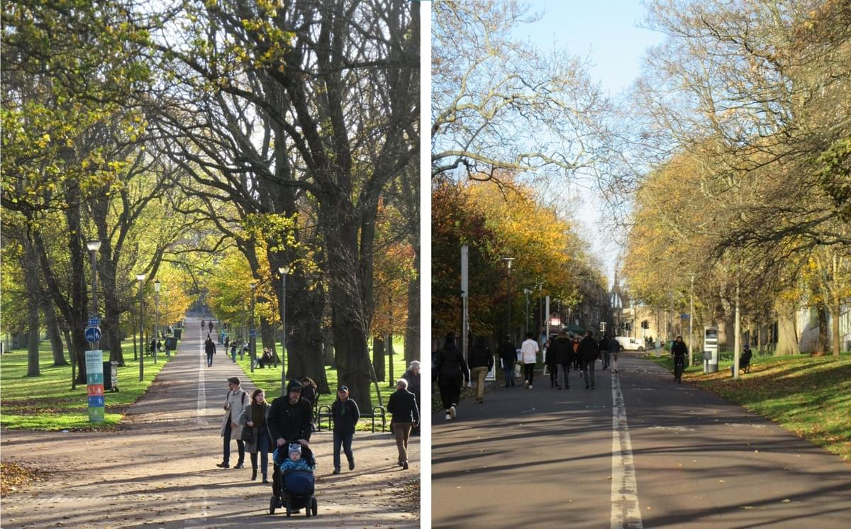 Middle Meadow Walk is the parks main avenue, originally planted either side with a double row of lime trees.