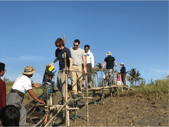 Restoring mangroves with the help of drones