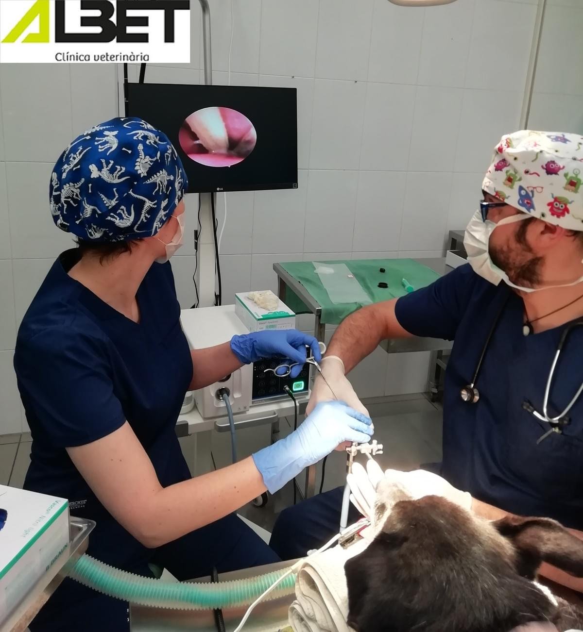 Endoscopio en Clinica veterinaria Albet, Vic