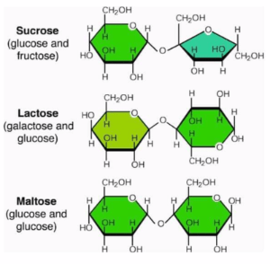 Structure of disaccharides