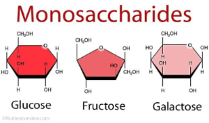 Structure of monosaccharides