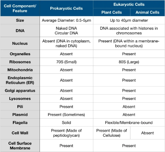 Comparison of prokaryotic and eukaryotic cells (plant and animal)