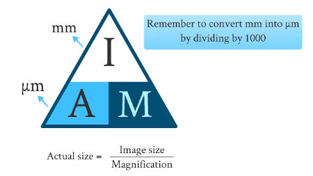 Formula triangle to calculate actual size, image size, or magnification of a specimen